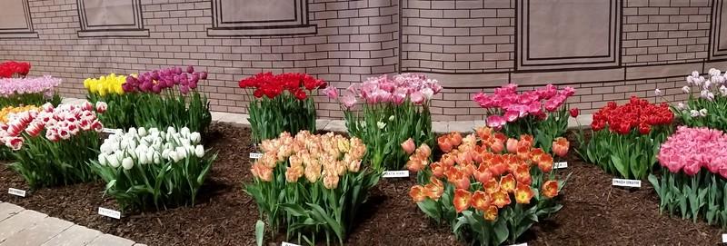 2015 Chicago Flower and Garden Show