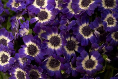 Chicago Flower and Garden Show 2009