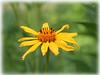 wildflower6347