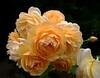 roses6742