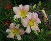 lilies7685