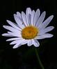 daisy7765