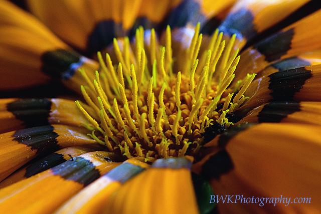 IMAGE: http://www.bwkphotography.com/Things/Flowers/IMG6298/876961797_9svyu-L-1.jpg