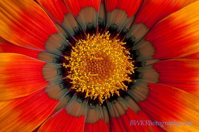 IMAGE: http://www.bwkphotography.com/Things/Flowers/IMG7345/898424926_v7s7N-L-1.jpg