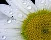 part daisy 3125