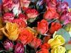 rosewallpaper6309