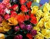 roses6309