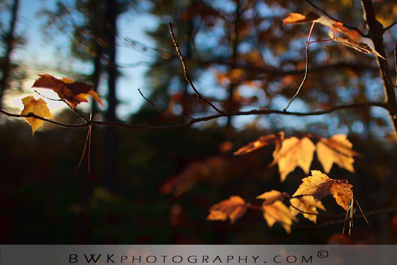 IMAGE: http://www.bwkphotography.com/Things/Flowers/i-WsGZMqv/0/XL/5DIIIMG2011-10-09-164912-2315-XL.jpg
