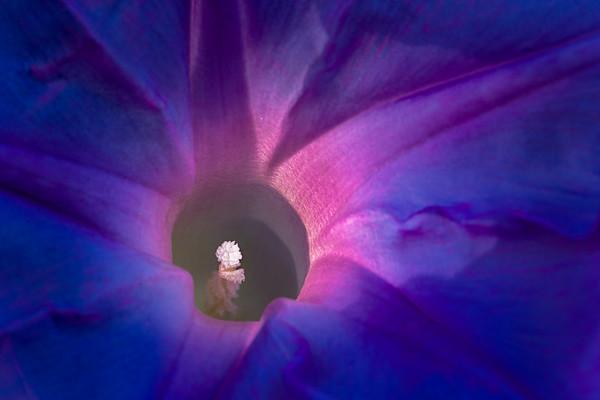 Flower<br /> 2020