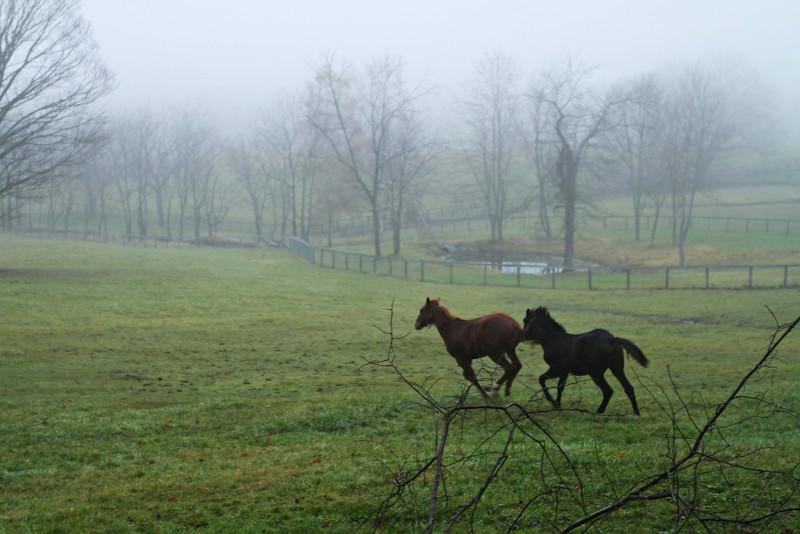 Bedford Farm, Clark Road