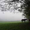 Bedford Farm