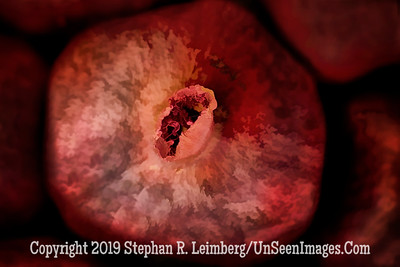 Pomegranate _H1R8252