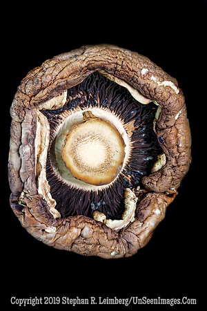 Jo-Ann's Mushroom - Copyright 2018 Steve Leimberg UnSeenImages Com 2018-07-18 19-38-35 (A,Radius8,Smoothing4)