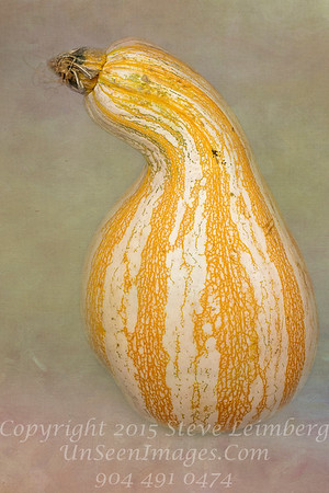 Orange Gourd - Copyright 2016 Steve Leimberg - UnSeenImages Com
