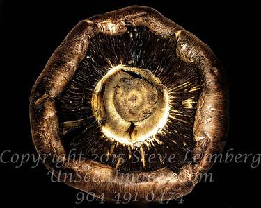 Mushroom - Copyright 2016 Steve Leimberg - UnSeenImages Com 2016