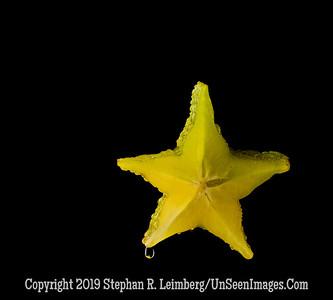 StarFruit Starfish A0002580