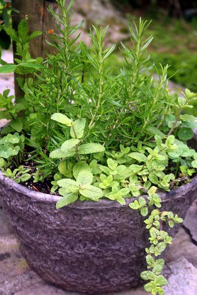 an herb pot