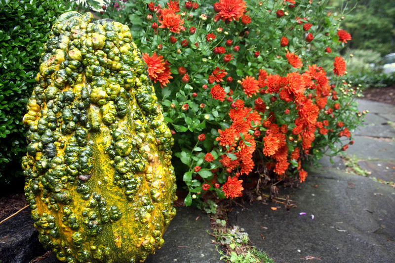 gourds - the uglier the better.