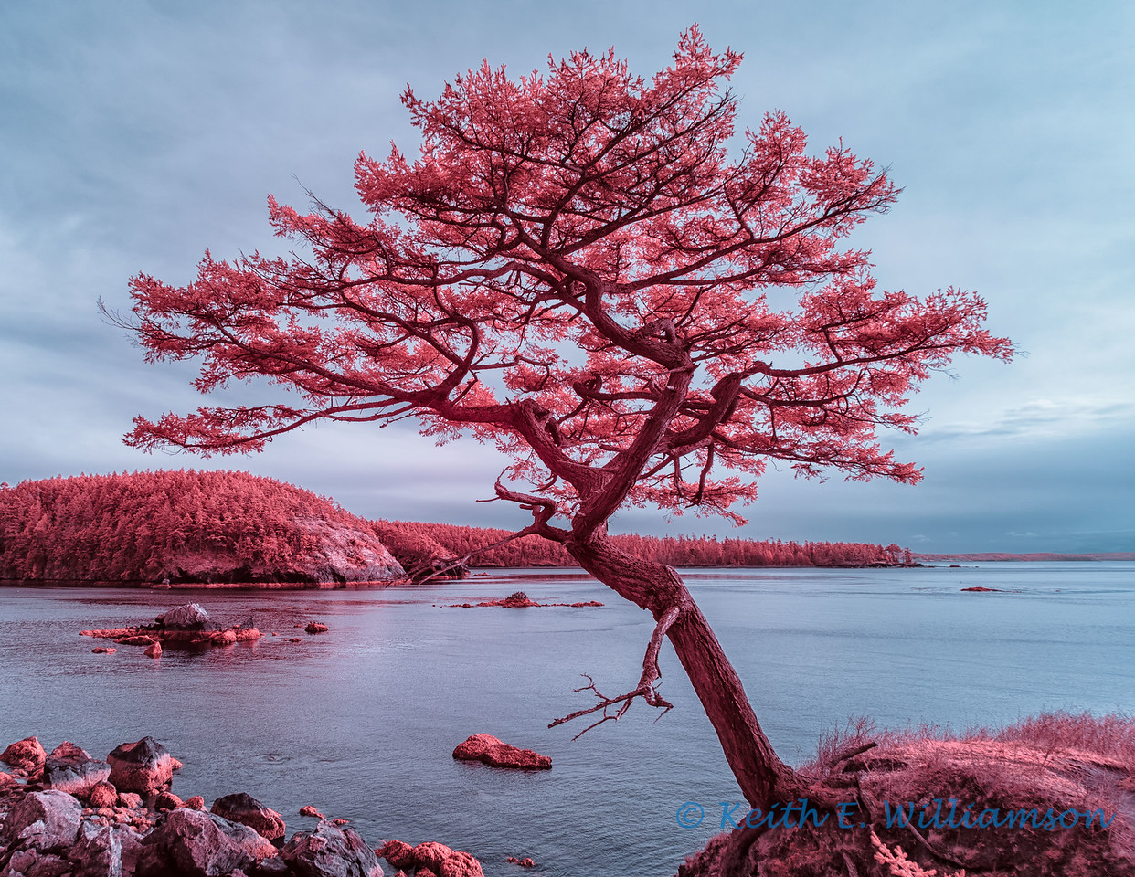 Bowman Bay, Deception Pass State Park - 2, in infrared
