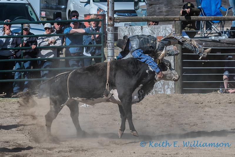 Bull riding - 7