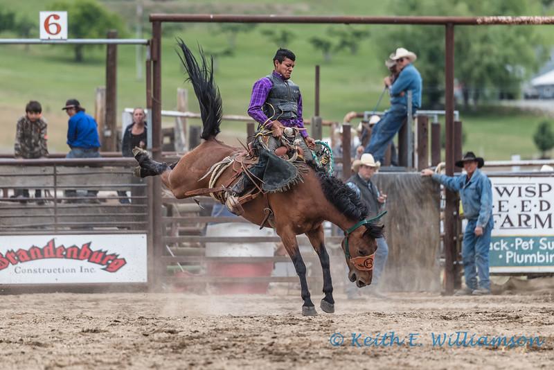 Bronc riding - 1