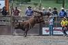 Bull riding - 6