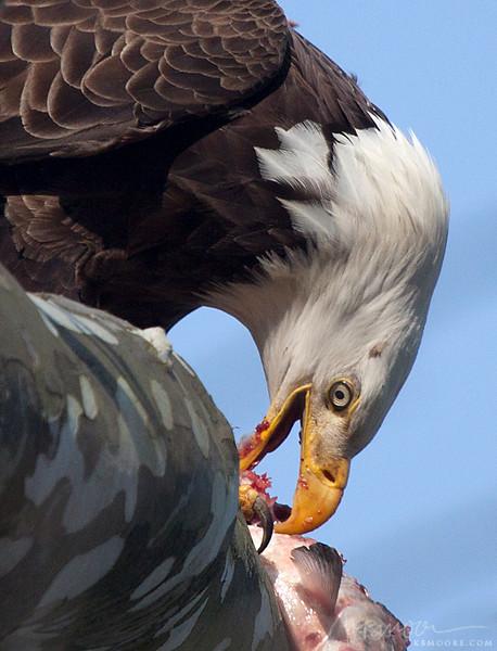 Eagle Sushi