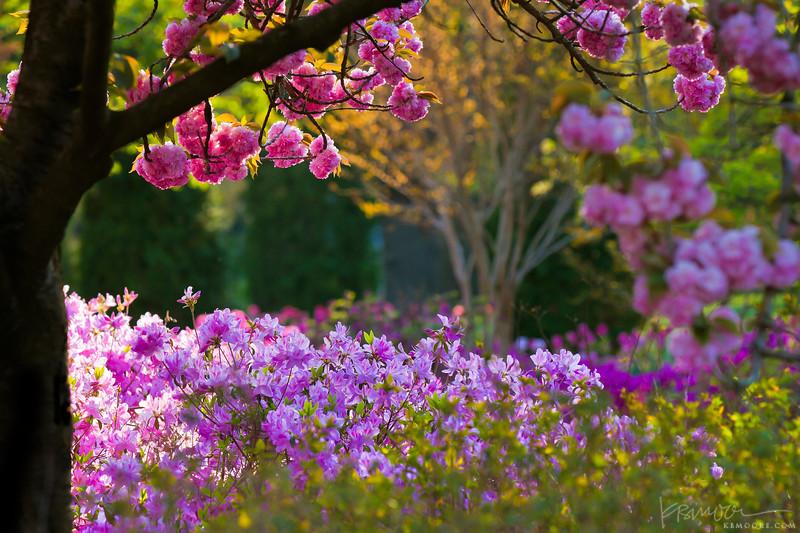 A Spring Evening in the Garden