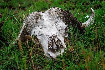 Skull Tanzania Copyright 20209 Steve Leimberg UnSeenImages Com _DSC1668