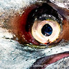 Eye Sea You TOO  - Copyright 2017 Steve Leimberg UnSeenImages Com _DSF9052