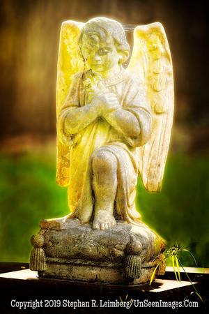 Golden Angel - Bosque Bello - Copyright 2019 Steve Leimberg - UnSeenImages Com _H1R8189