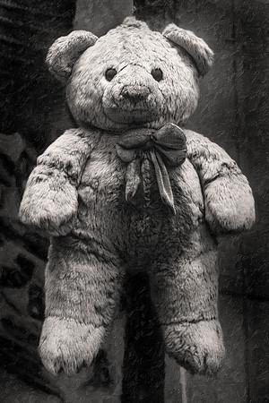 Kenyan Teddy Bear Copyright 2020 Steve Leimberg UnSeenImages Com _Z2A3641