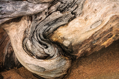 Gallapagos Driftwood Copyright 2020 Steve Leimberg UnSeenImages Com _DSC8941