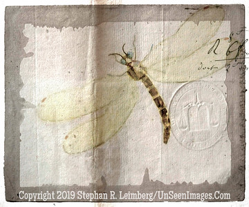 Dragonfly T  - Copyright 2016 Steve Leimberg - UnSeenImages Com _Z2A4442