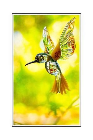 Becky's Hummiingbird x Copyright 2019 Steve Leimberg UnSeenImages Com _DSF0426