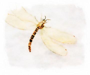 Dragonfly - Copyright 2016 Steve Leimberg - UnSeenImages Com _Z2A4442