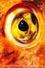 Eye Sea You - Copyright 2017 Steve Leimberg UnSeenImages Com _DSF9013