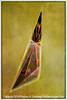 Glass II - Copyright 2016 Steve Leimberg - UnSeenImages Com L1020069