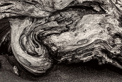 Driftwood on Beach Copyright 2020 Steve Leimberg UnSeenImages Com _DSC8951