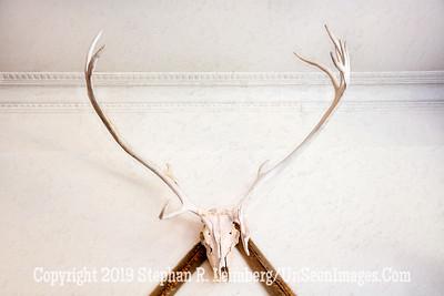 Horns - Copyright 2019 Steve Leimberg UnSeenImages Com _Z2A5356