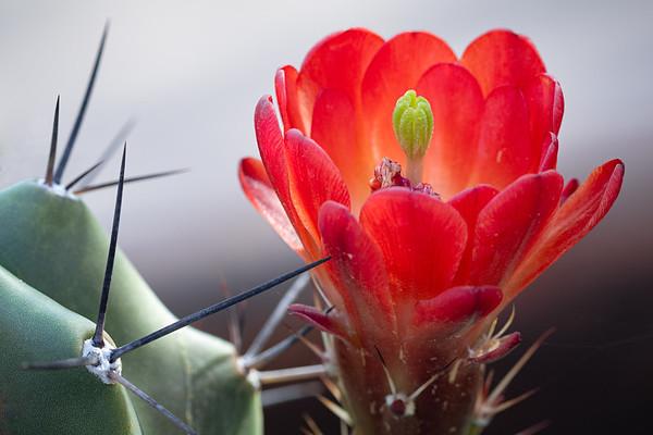 Cactus flower 2018