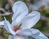 Blossom, Butchart Gardens
