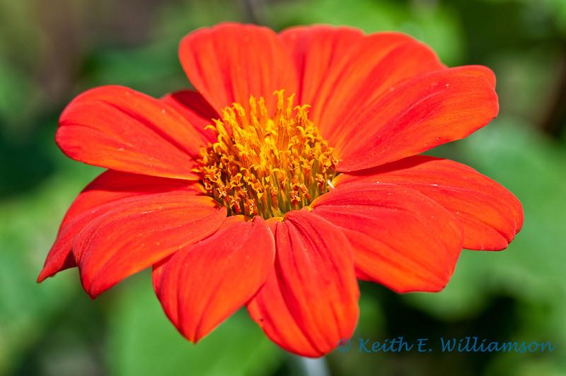 Flower at Mcbryde gardens