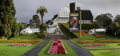 SF COnservatory of FLowers-Edit_sample