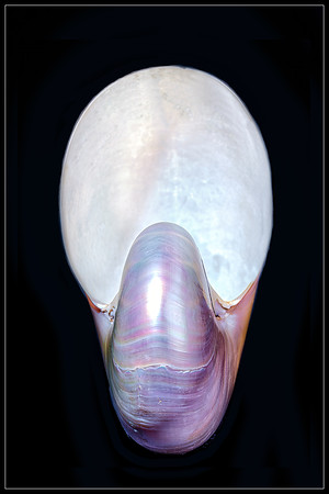 Nautilus Shell Copyright 2020 Steve Leimberg UnSeenImages Com _DSF0520