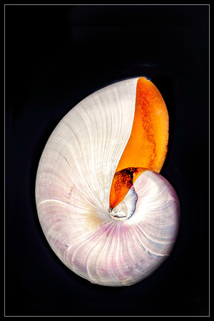 Nautilus Shell Copyright 2020 Steve Leimberg UnSeenImages Com _DSF0536