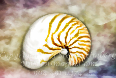 Shell - PAINTING -  Copyright 2016 Steve Leimberg - UnSeenImages Com