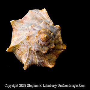 Top of Conch jpg 20110603_5722