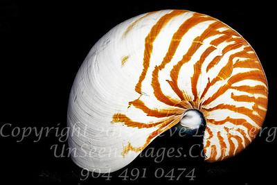 Shell - Copyright 2016 Steve Leimberg - UnSeenImages Com