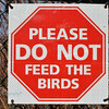 Please Do Not Feed The Birds